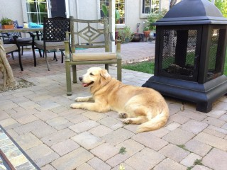 Kali at rest in her new back yard