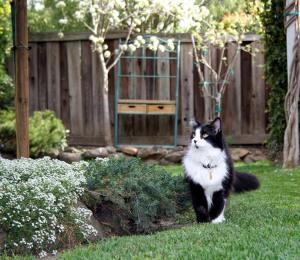 2010 spring garden 060