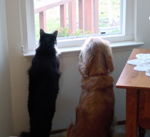 Panda and Bailey checking out the action in the neighborhood