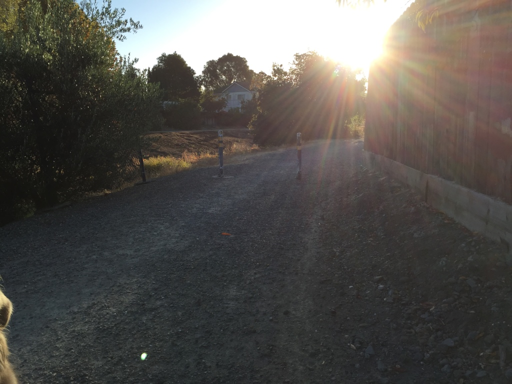 Sun just creeping up over the trail head.