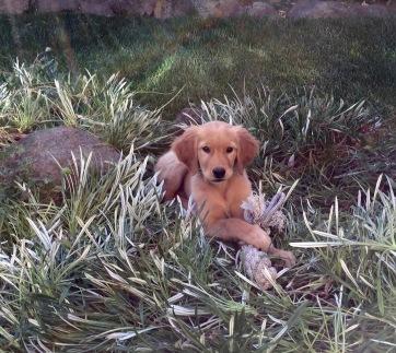 Kloe at 10 weeks