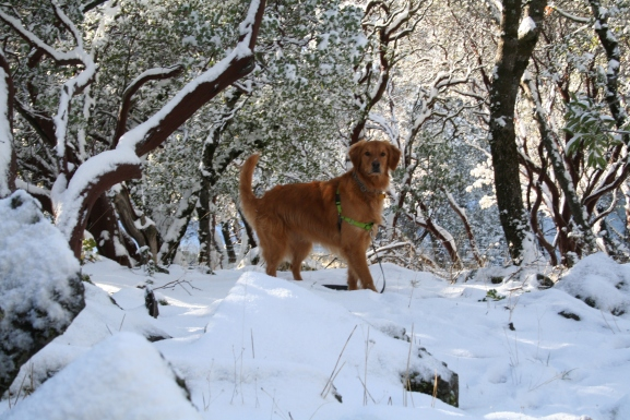 Kloe last winter